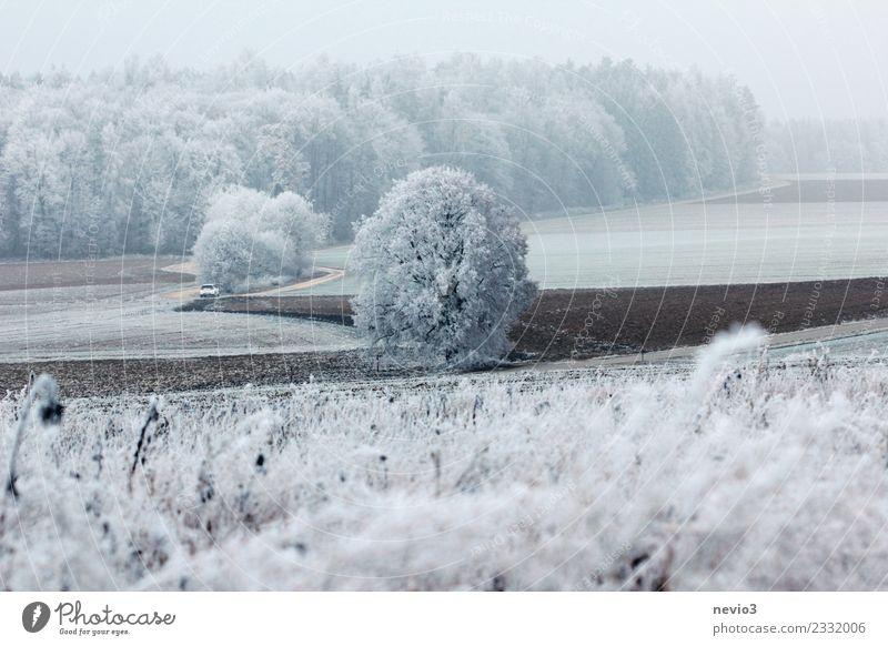Winterlandschaft mit Sträuchern und Schnee bedeckten Bäumen Umwelt Natur Landschaft Pflanze Klima Klimawandel Wetter Eis Frost Schneefall Baum Grünpflanze