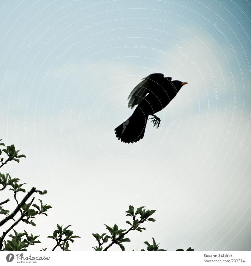 flieg! Himmel Baum Blatt Bewegung Vogel fliegen Wildtier Luftverkehr Flügel positiv Abheben Flucht Schnabel Perspektive Krallen Zweige u. Äste