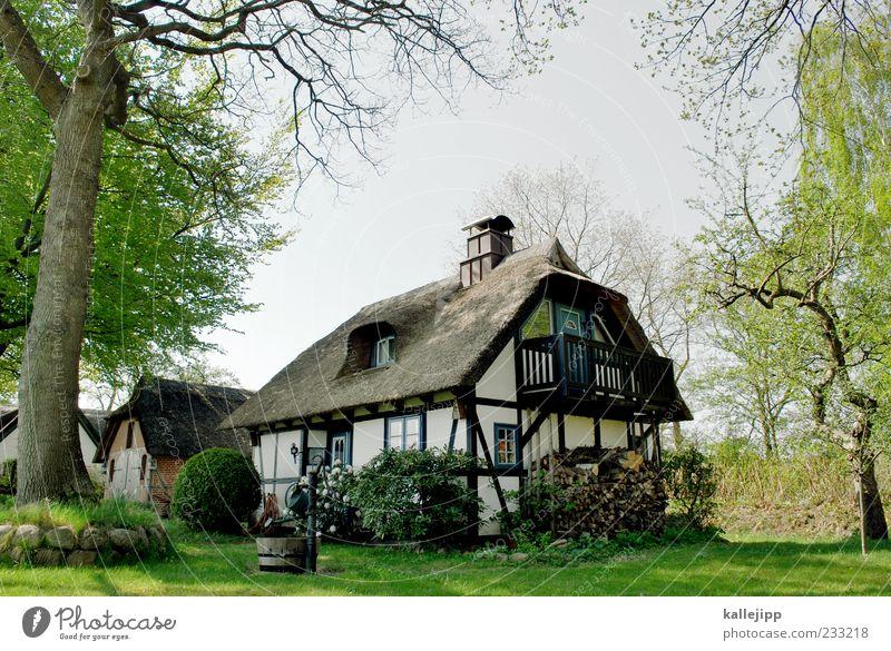 holsten knallt am dollsten Natur Baum Pflanze Haus ruhig Umwelt Wiese Landschaft Garten Gebäude Stil Deutschland Wohnung elegant Lifestyle Häusliches Leben