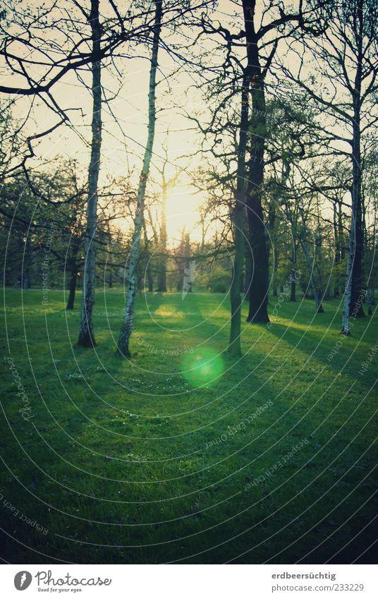°o Umwelt Natur Pflanze Frühling Schönes Wetter Baum Gras Blatt Park Wiese Erholung leuchten Wachstum frei frisch grün rein Birke Baumstamm Ast Zweig Lichtfleck