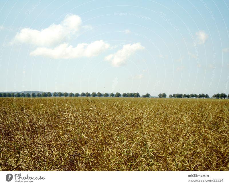 Kornfeld Feld Allee Wolken Baum Himmel