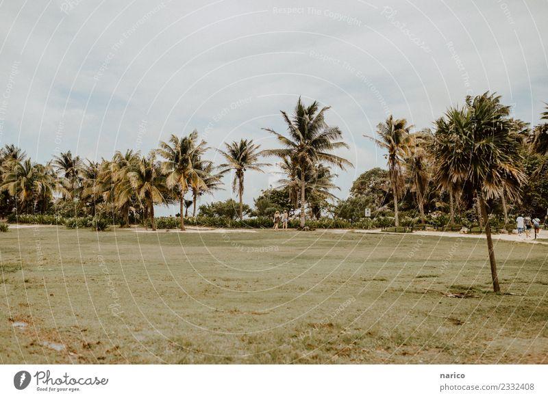 Mexico II Natur Landschaft Pflanze Sommer Baum Gras Park Umwelt Tulum Mexiko Farbfoto Gedeckte Farben Außenaufnahme Textfreiraum oben Textfreiraum unten Tag