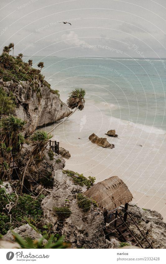 Mexiko III Umwelt Natur Landschaft Felsen Wellen Strand Bucht Meer Tier Vogel Stein Sand Holz beobachten entdecken fliegen Idylle Tulum Farbfoto Gedeckte Farben