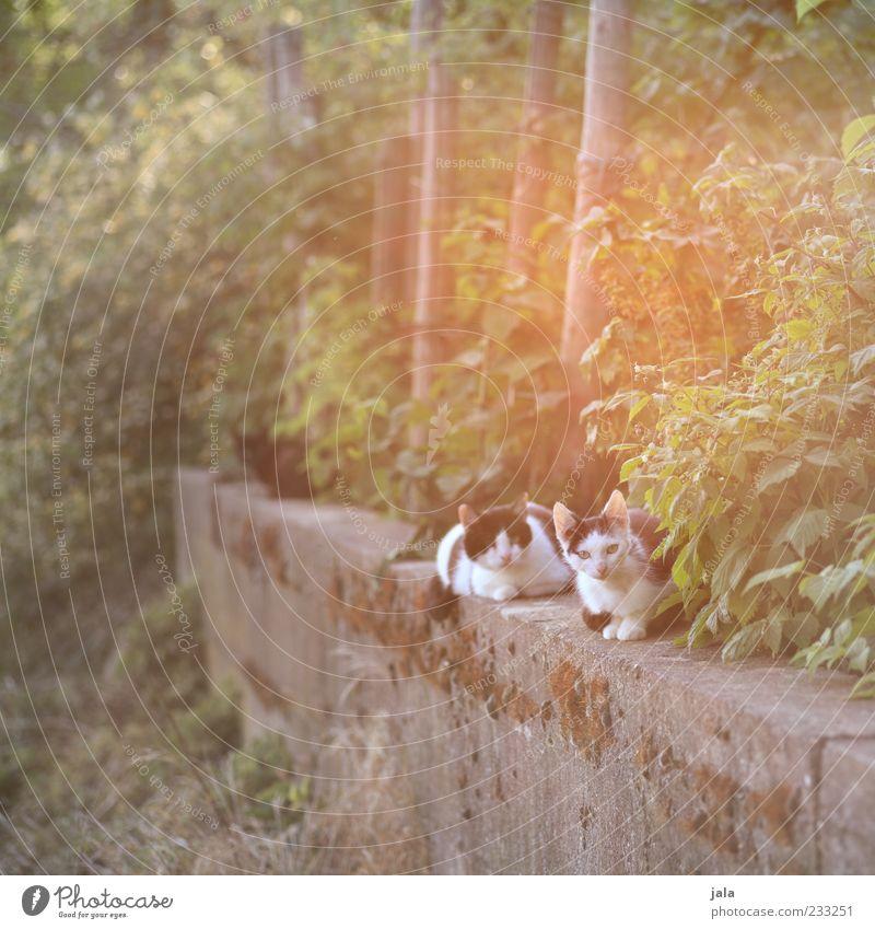 sonnentag Katze schön Pflanze Erholung Tier Mauer hell sitzen Sträucher beobachten Baumstamm Haustier Zweige u. Äste Herumtreiben freilebend Straßenkatze