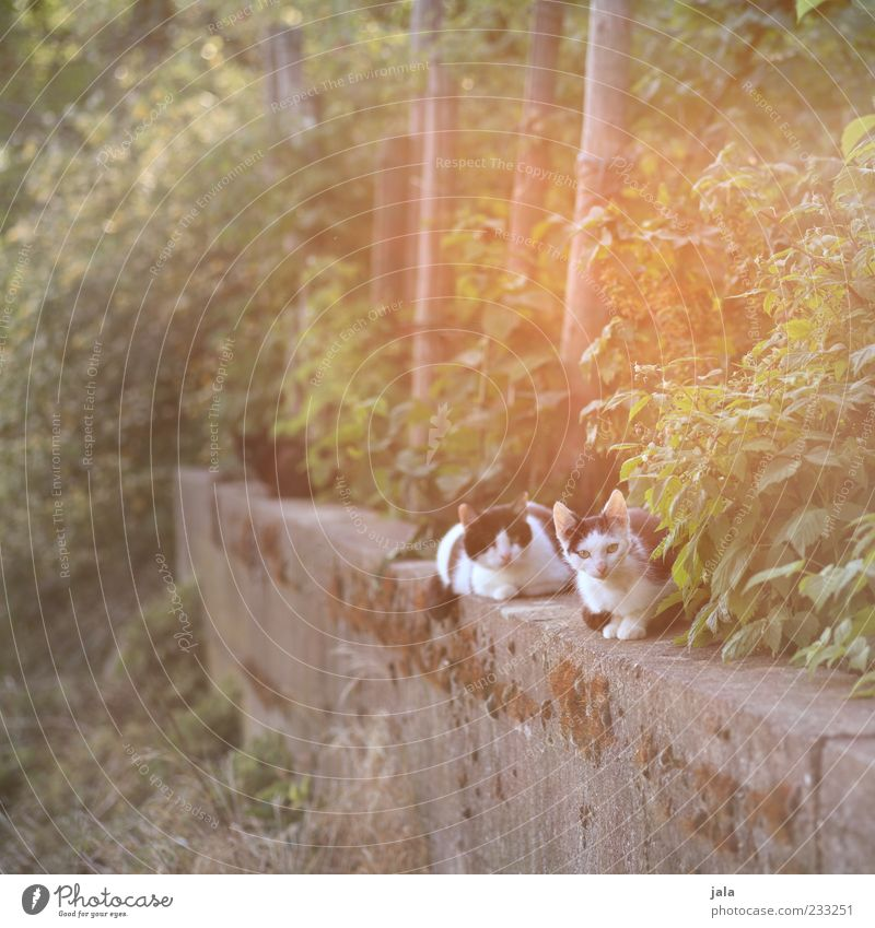 sonnentag Pflanze Sträucher Tier Haustier Katze 3 Erholung sitzen hell schön Farbfoto Außenaufnahme Menschenleer Dämmerung Licht Lichterscheinung Sonnenlicht