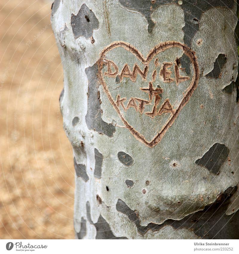 William and Kate? Paar Pflanze Baum Platane Baumstamm Park Platz Zeichen Schriftzeichen Herz schreiben Wachstum Zusammensein natürlich Gefühle Glück