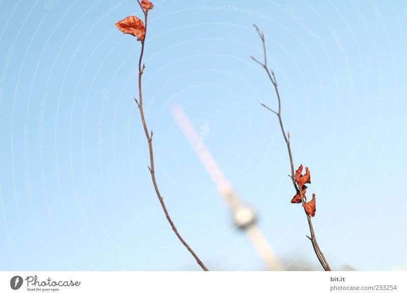 Falsche Katze... blau Sommer Blatt Ferne Herbst Berlin klein Frühling Perspektive Wandel & Veränderung Turm historisch Wahrzeichen Zweig Herbstlaub silber
