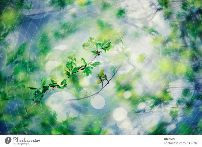 rüberwachsen blau grün Pflanze Frühling Wachstum Sträucher Zweige u. Äste Frühlingsgefühle Wildpflanze zartes Grün