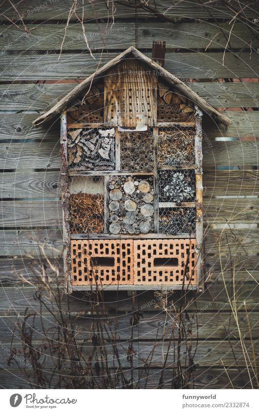 Insektenhotel hängt an Holzwand Natur Haus Winter Umwelt Stein Häusliches Leben Hilfsbereitschaft Schutz Hotel Biene Gleichgewicht Umweltschutz ökologisch