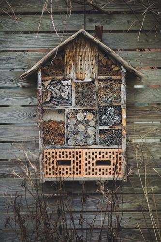 Insektenhotel hängt an Holzwand Umwelt Natur Winter Häusliches Leben überwintern Hotel Stein Nest Nestbau Überleben Haus Nistkasten Zufluchtsort Biologie