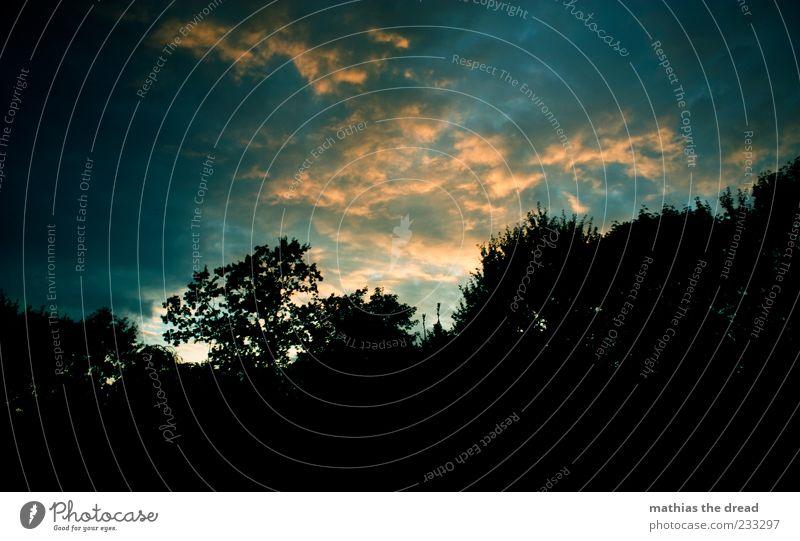 ABENDSTIMMUNG Umwelt Natur Landschaft Himmel Wolken Sommer Schönes Wetter Baum Wald ästhetisch außergewöhnlich dunkel Kontrast Farbfoto mehrfarbig Außenaufnahme
