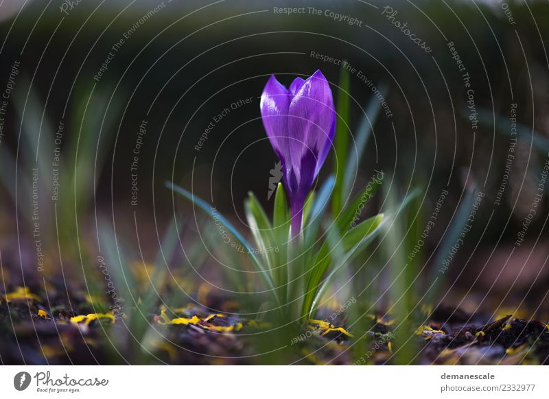 Krokus Natur Pflanze schön grün Landschaft Blume Tier Blatt Leben gelb Umwelt Blüte Frühling klein Wachstum frisch