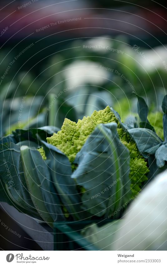 Gemüse Leben Pflanze Leidenschaft Fitness Bioprodukte kochen & garen Essen zubereiten Vegane Ernährung Vegetarische Ernährung Blumenkohl Romanesco Markt