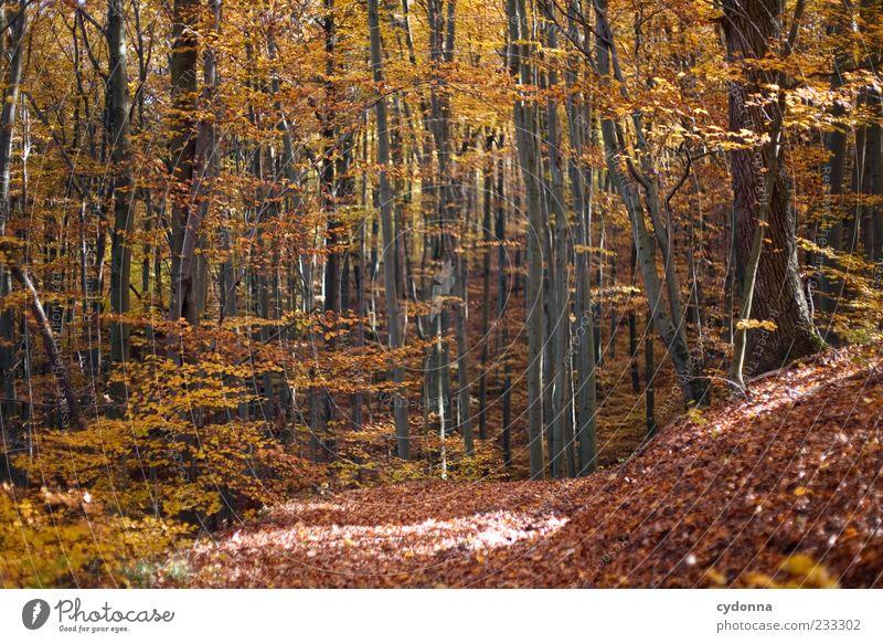 Herbstwald Natur schön Baum Einsamkeit ruhig Wald Erholung Umwelt Landschaft Freiheit Wege & Pfade Zeit Zufriedenheit Ausflug Wandel & Veränderung