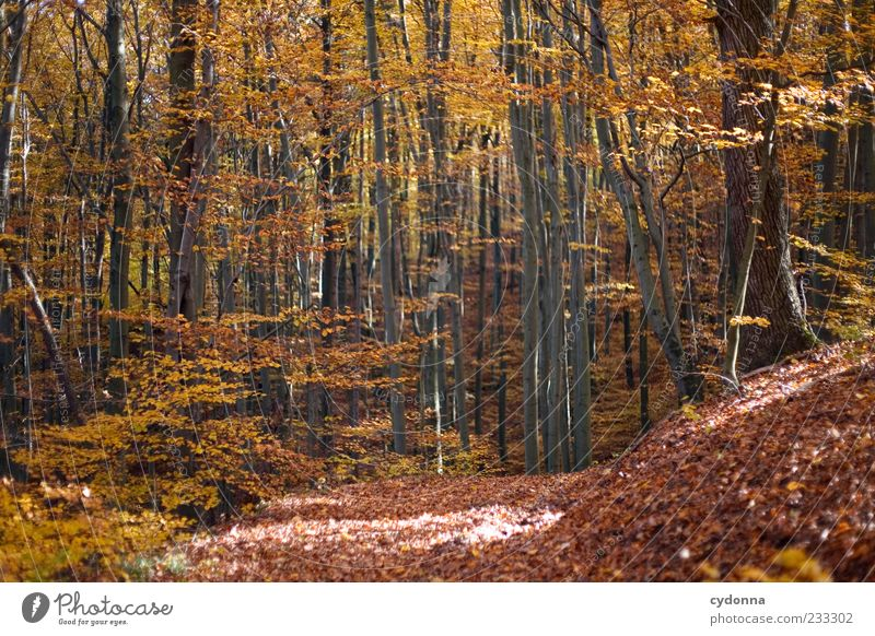 Herbstwald Natur schön Baum Einsamkeit ruhig Wald Erholung Umwelt Herbst Landschaft Freiheit Wege & Pfade Zeit Zufriedenheit Ausflug Wandel & Veränderung