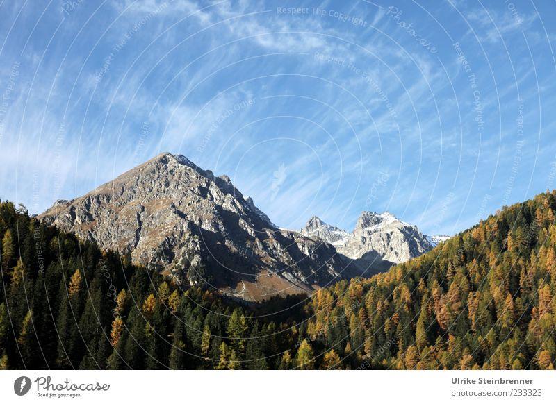 Fön Ferien & Urlaub & Reisen Tourismus Ausflug Berge u. Gebirge Natur Landschaft Pflanze Himmel Wolken Herbst Schönes Wetter Baum Felsen Alpen Bernina
