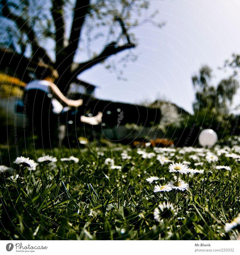 wenn ich ein blümchen wär 1 Mensch 45-60 Jahre Erwachsene Natur Pflanze Sonne Sonnenlicht Frühling Schönes Wetter Blume Gras Blüte Garten blau grün weiß