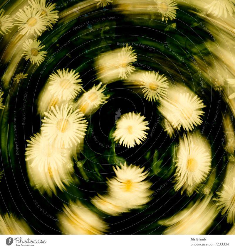 blumenkranz mal anders Natur grün Pflanze Blume gelb Leben Bewegung Blüte Frühling drehen Verwirbelung