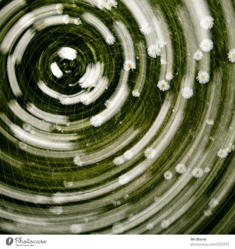 swuosch Natur Pflanze Frühling Blume Blüte Wiese grün weiß Verwirbelung drehen Spuren Farbfoto Außenaufnahme Menschenleer Bewegungsunschärfe außergewöhnlich