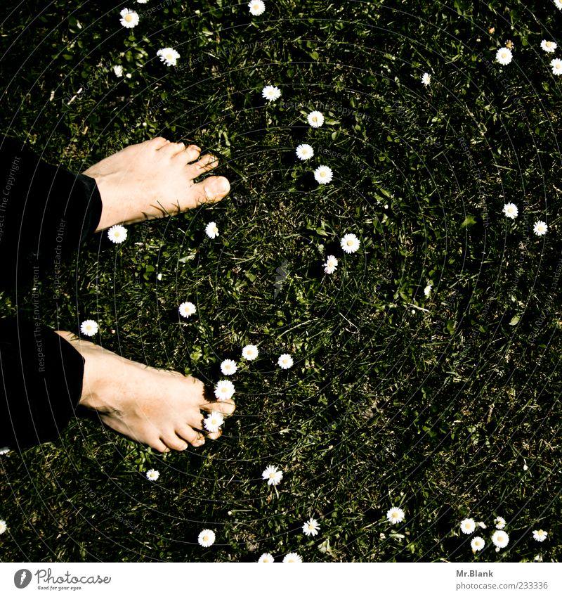 bodenständig Mensch maskulin 1 Natur Pflanze Frühling Blume Gras Blüte Wiese Zufriedenheit Lebensfreude Frühlingsgefühle Fuß Boden Zehen Gänseblümchen Farbfoto