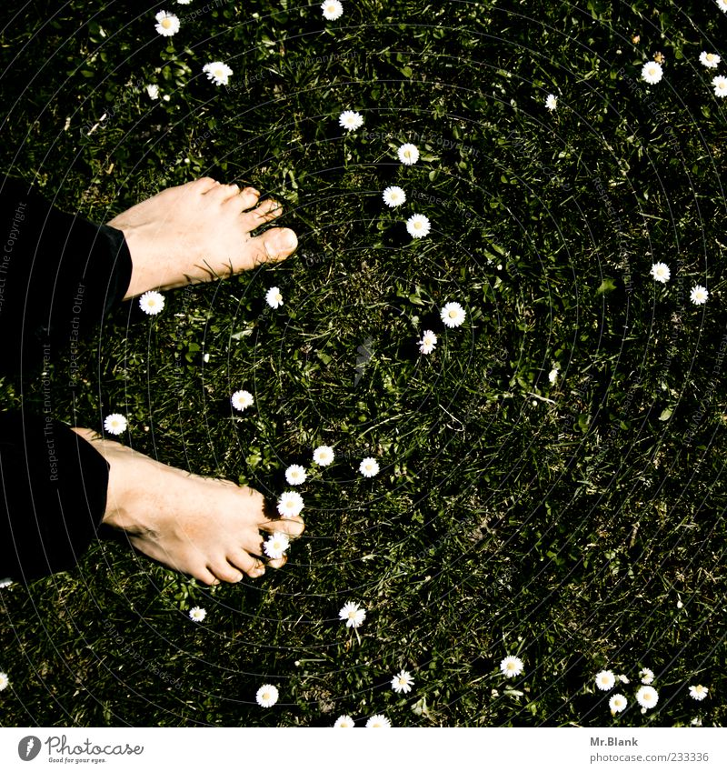 bodenständig Mensch Natur Pflanze Blume Wiese Gras Blüte Frühling Fuß Zufriedenheit maskulin Boden stehen Symbole & Metaphern Lebensfreude Gänseblümchen