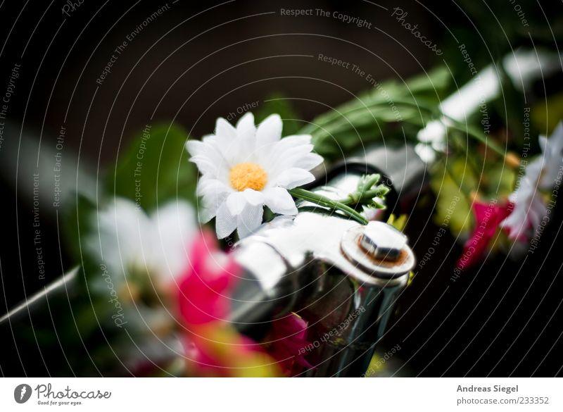 Blumenkinderrad Dekoration & Verzierung Fahrrad außergewöhnlich Fröhlichkeit einzigartig Originalität positiv schön Fahrradlenker Blüte Farbfoto mehrfarbig