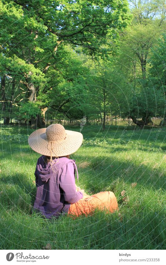 romantisches Mädchenfoto mit Mädchen Mensch Frau Natur schön Sommer ruhig Erwachsene Wiese feminin Frühling Stil Glück Park Idylle Zufriedenheit sitzen