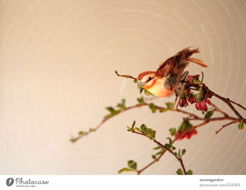 Wer keinen Vogel hat,kann auch keine originellen Ideen ausbrüten grün schön Pflanze Frühling Stimmung braun Wohnung elegant ästhetisch Dekoration & Verzierung