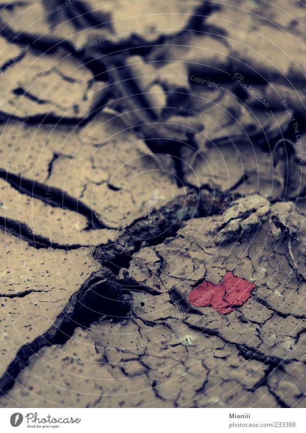 Liebe im Dreck Erde Herz dreckig braun rot Farbfoto Außenaufnahme Schwache Tiefenschärfe trocken Menschenleer herzförmig Dürre Boden Symbole & Metaphern