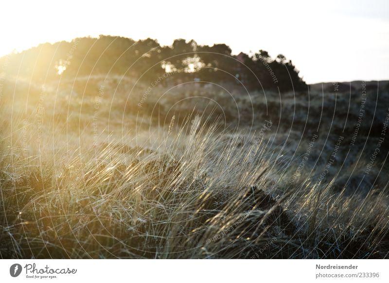 Spiekeroog | Foxifoto Natur Pflanze Sonne Einsamkeit Wiese Landschaft Gras Küste Stimmung glänzend Klima Sträucher Idylle Schönes Wetter Düne Lebensfreude