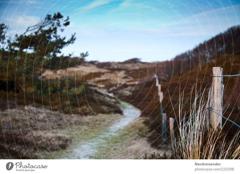 Spiekeroog | Gemälde Himmel Natur Baum Ferien & Urlaub & Reisen Pflanze Sommer Einsamkeit ruhig Landschaft Gras Wege & Pfade Küste Stimmung Klima Ausflug