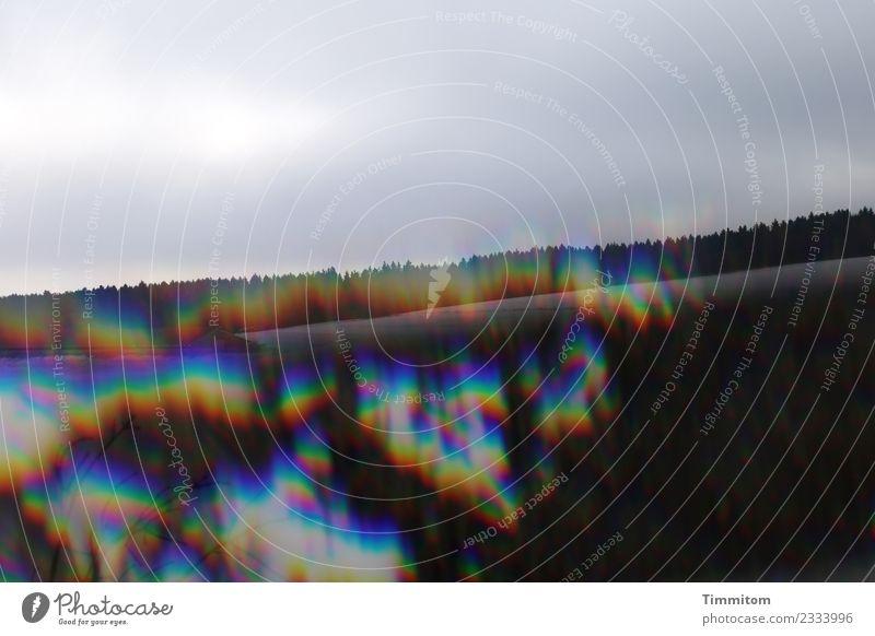 kreativ   Schwarzwald mit Farbe Umwelt Natur Winter Schnee Wald grau schwarz Hügel Wolken Reflexion & Spiegelung Farbfoto Außenaufnahme Menschenleer