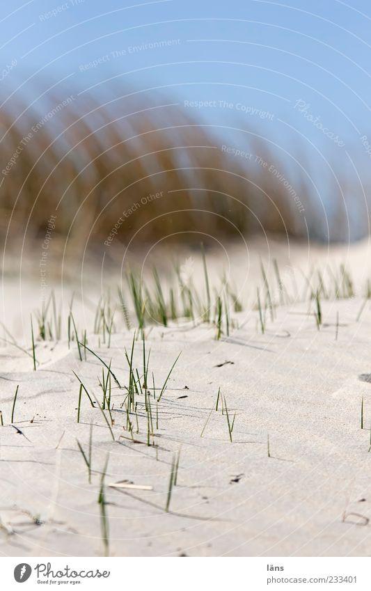 Spiekeroog | ....|.| Himmel Natur blau Strand Umwelt Sand Stranddüne Unschärfe Dünengras