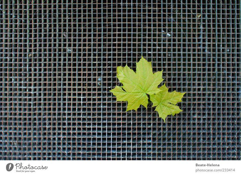 Auf der Suche nach den Wurzeln Natur grün Pflanze Blatt ruhig grau Stimmung Linie Kraft außergewöhnlich paarweise Hoffnung berühren stark Stahl