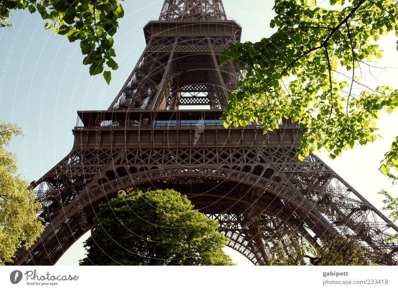 Stahlfachwerkturm Paris Turm Bauwerk Gebäude Architektur Sehenswürdigkeit Wahrzeichen Tour d'Eiffel Bekanntheit fantastisch Stahlträger Blatt Baum Konstruktion