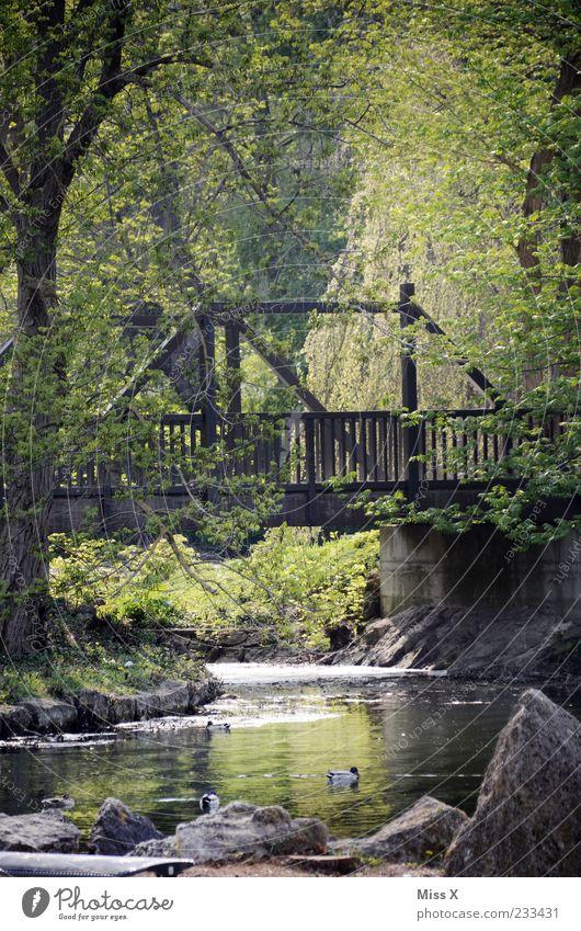 Idyll Natur Frühling Pflanze Baum Park Wald Felsen Flussufer See Bach Idylle ruhig Brücke Holzbrücke Ente Farbfoto Außenaufnahme Menschenleer Morgen Licht