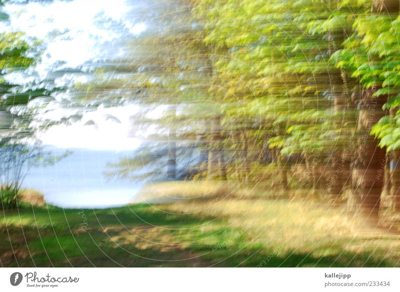 wish - you were here Himmel Natur Wasser Baum Pflanze Sommer Wald Umwelt Landschaft Küste Frühling Wind Tanne
