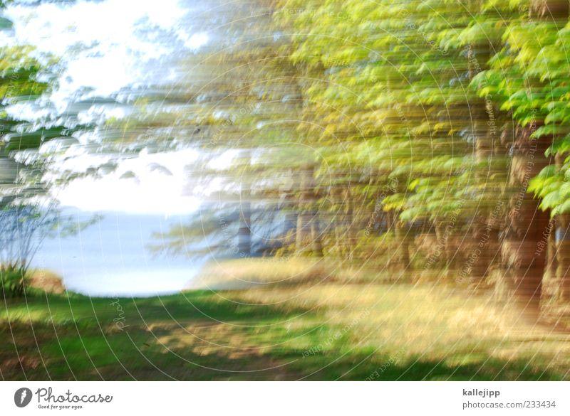 wish - you were here Umwelt Natur Landschaft Pflanze Wasser Himmel Frühling Sommer Wind Baum Wald Küste Tanne Farbfoto mehrfarbig Außenaufnahme Menschenleer