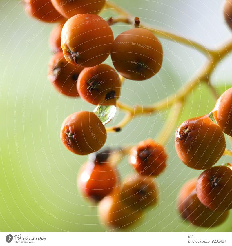 Frühstück für Frau Vogel Natur grün Pflanze Umwelt klein orange elegant glänzend nass natürlich Wassertropfen Wachstum leuchten Sträucher rund berühren