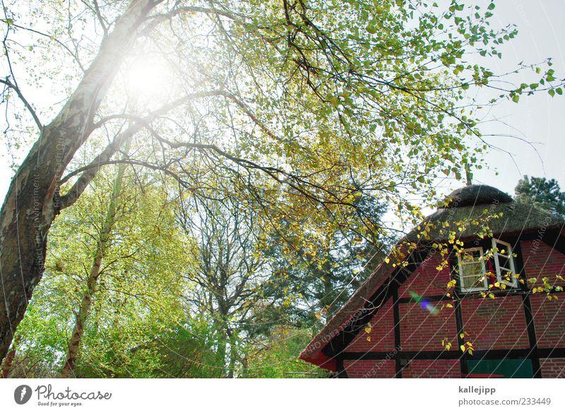 ruhe Natur Baum Sonne Blatt Haus ruhig Fenster Garten Frühling Wohnung Fassade Lifestyle Häusliches Leben Dach Idylle Schönes Wetter