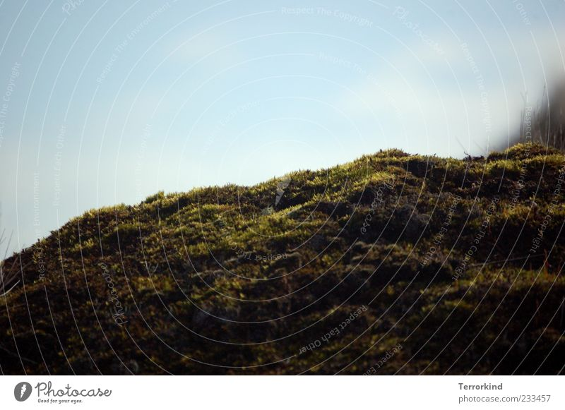 Spiekeroog | Moos.Mensch Himmel Sommer Hügel