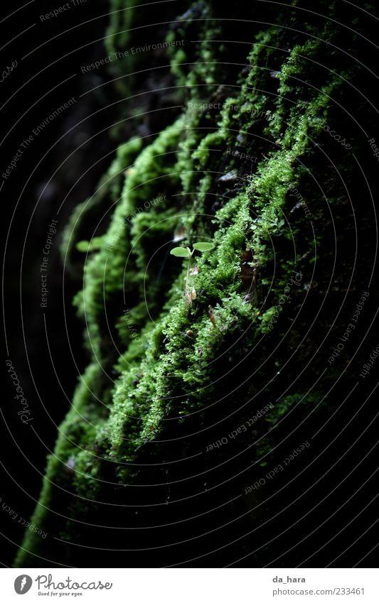kleiner, grüner Zwerg Natur Erde Wasser Pflanze Gras Moos Felsen leuchten Wachstum frisch kalt nass weich schwarz ruhig Leben Mittelpunkt Farbfoto Außenaufnahme