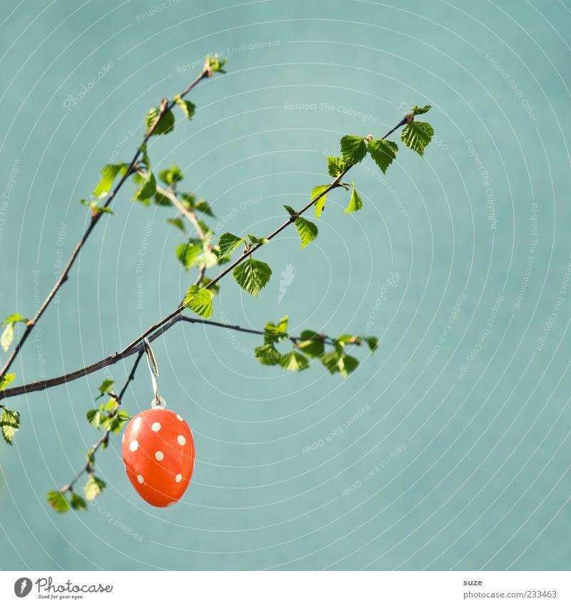 Reife Eizelle Ostern hängen Fröhlichkeit Kitsch niedlich schön Dekoration & Verzierung Osterei gepunktet Zweig Frühling April Farbfleck grün festlich Blatt