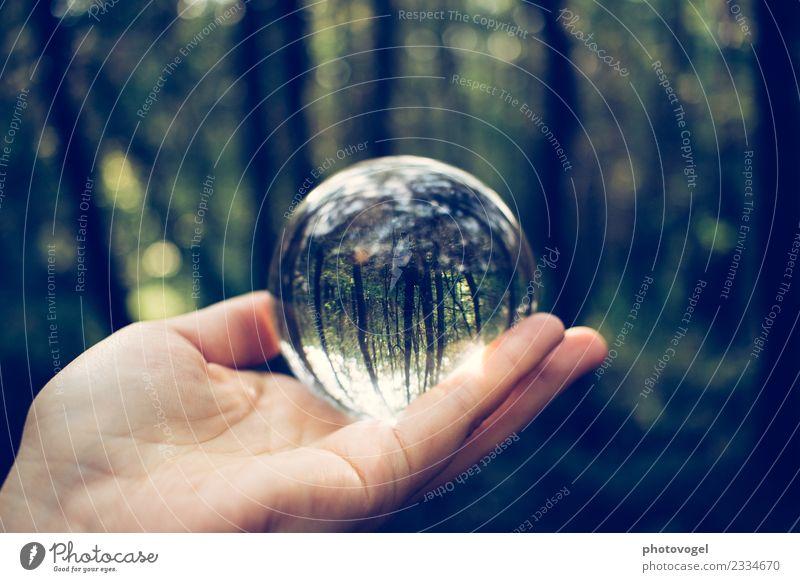 Auf den Kopf gestellt Umwelt Natur Baum Wald glänzend Unendlichkeit rund grün Zufriedenheit selbstbewußt Optimismus Erfolg Kraft Willensstärke Akzeptanz schön