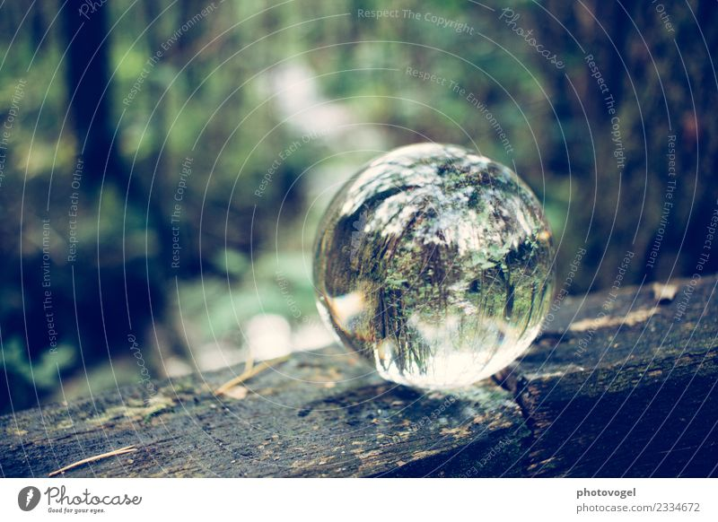 Waldkugel Umwelt Natur Baum natürlich rund Zufriedenheit Akzeptanz Vertrauen Sicherheit Verantwortung achtsam Gelassenheit geduldig ruhig Kugel Glaskugel