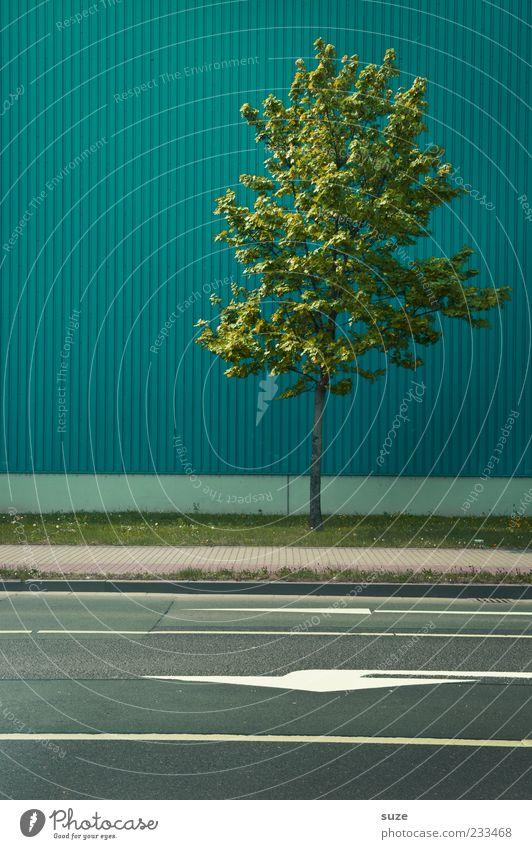 Umweltzone Natur grün Stadt Baum Wand Straße Mauer klein Gebäude Fassade Klima authentisch Schilder & Markierungen Urelemente einfach