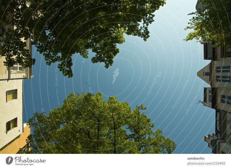 Dickhardt Pflanze Wolkenloser Himmel Frühling Baum Blüte Stadt Haus Park Bauwerk Gebäude Architektur Blühend Wachstum Frühlingsgefühle Romantik Farbfoto
