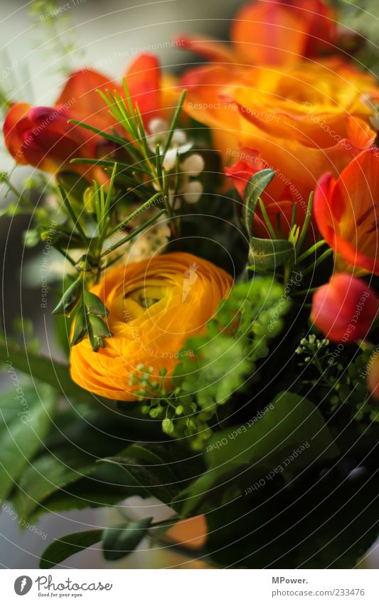 bald is Muttertag... Pflanze Rose Blatt Blüte mehrfarbig grün Blumenstrauß orange Farbfoto Innenaufnahme Nahaufnahme Detailaufnahme Unschärfe Menschenleer