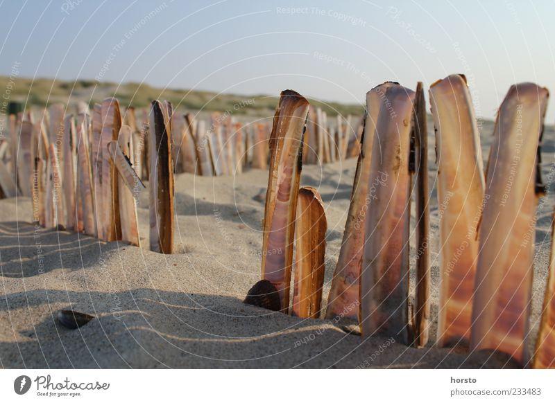 Strandlaternen Natur schön Farbe Sommer Meer ruhig Freiheit braun Sand Freizeit & Hobby ästhetisch Ausflug einzigartig Warmherzigkeit harmonisch