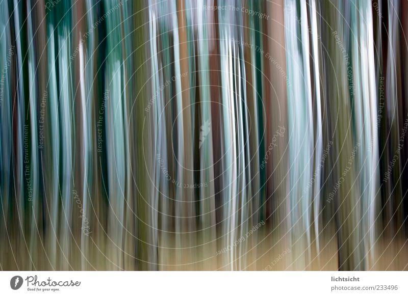 Streifenwald Stil Design Linie fallen Bewegung Geschwindigkeit träumen Farbenspiel Farbverlauf vertikal Hintergrundbild abstrakt Wandel & Veränderung Farbfoto